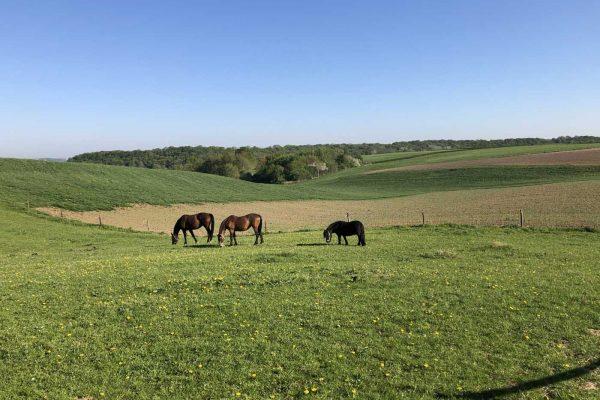 paarden op de boerderijcamping